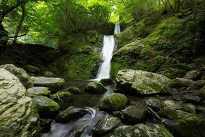vattenfall och färsk grön foto