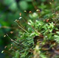 närbild ormbunke och mossa i skogen