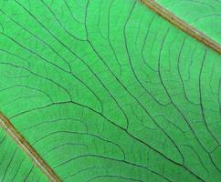 grönt blad makro