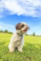 lycklig valp på hundparken foto