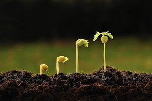 ung växt foto