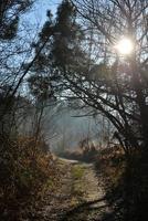 vandringsled som passerar genom skogen under soluppgång foto
