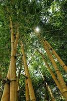 bambu lund foto