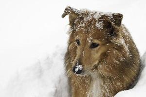 njuter av en snödag foto
