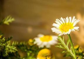 vit blomma, enda blomma foto