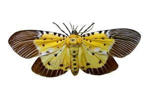 färgglad fjäril isolerad på vitt