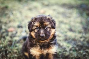 ung hund foto