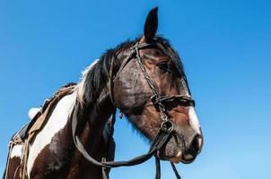häst tyg porträtt foto