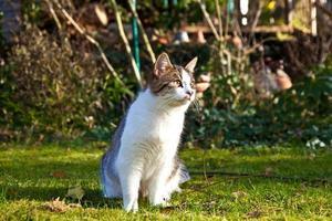 söt katt tycker om trädgården foto