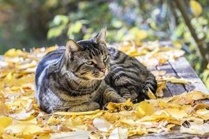 katt tycker om det varma ljuset på hösten foto