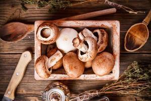 bruna svampar foto