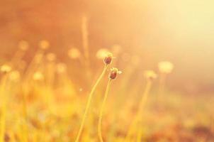 vild blomma med linsutflytning. foto