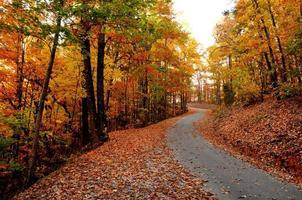 höstfärger med blad på en bergsväg foto