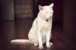 vit katt sovande stående, process retro vintage stil foto