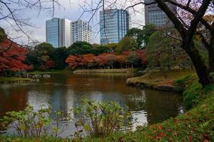 koishikawa korakuen trädgård på hösten i tokyo