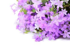 klocka blommor foto