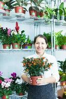 blomsterhandlare med calamondin t i blomsterbutiken foto