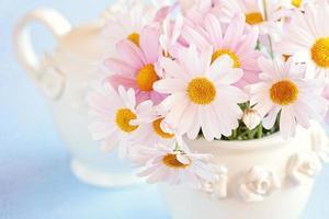 prästkragar blommor