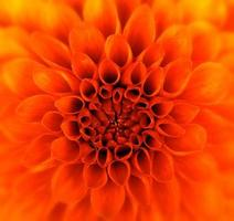 närbild blomma foto