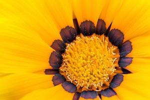 gul blomma foto