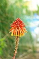 exotisk blomma foto