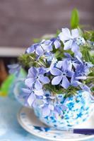 glömmenot blommor foto
