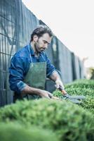trädgårdsmästare beskärning på plantskolan foto