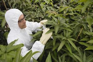 arbetare i skyddsoveraller som mäter växter foto