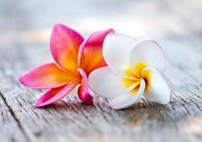plumeria blommor foto