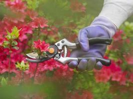 beskärning av blommor