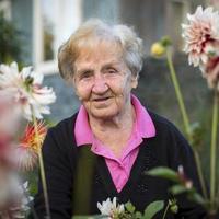 porträtt av en äldre kvinna i trädgården. foto