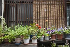 växter foto