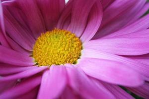 blomma centrum foto