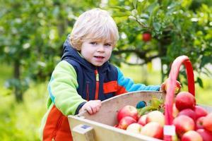 småbarn pojke på äpple gård plockning skörd foto