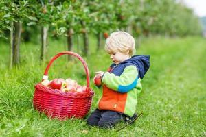 litet barnpojke som plockar röda äpplen i en fruktträdgård foto