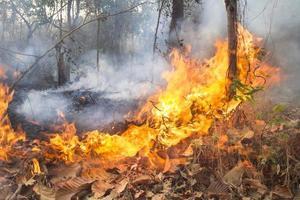 förstördes av brinnande tropisk skog, Thailand foto