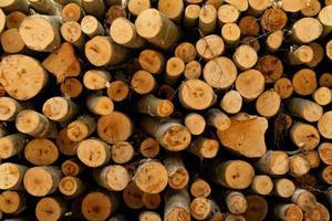 skogsavverkning foto