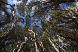 skog med blå himmel bakgrund foto