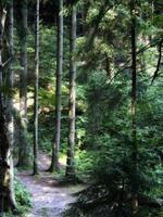 skog som målad foto