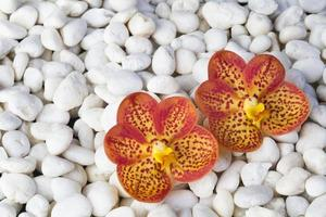 stenar och orkidé foto