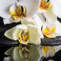 vacker spa-inställning av vit orkidé (phalaenopsis)