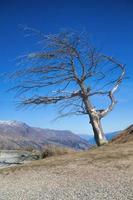 lövfritt träd foto
