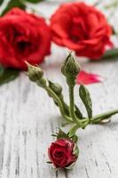 vackra röda rosor foto