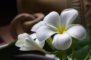 blomma plumeria vintage och boutique stil dekoration för spa foto