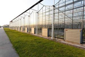 bakgrund av ett kommersiellt växthus foto