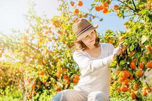 kaukasisk tjej som skördar mandariner och apelsiner i ekologisk gård foto