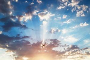 vacker molnlandskap och flygande fågel, soluppgång skott