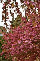 blommor av Notre Dame foto