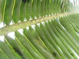 närbild detalj av palmblad foto