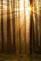 soluppgång i skogen foto